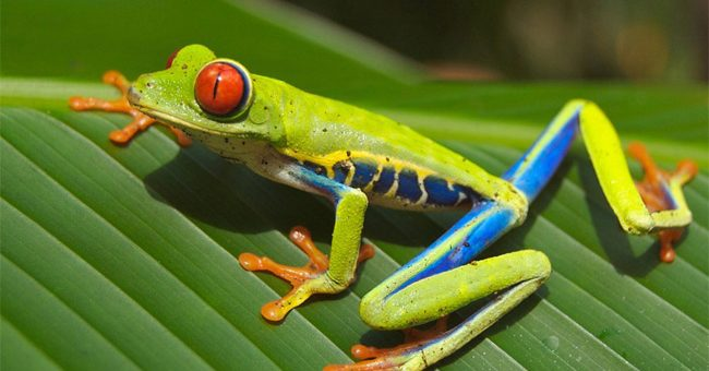 Le 20 juin à Paris, déjeuner de la Cotal : Office de Tourisme du Costa Rica
