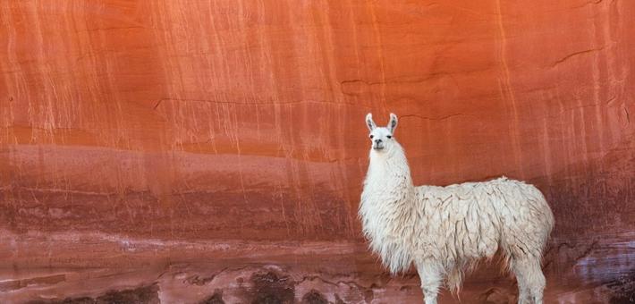 Les meilleurs spots d'Amérique latine pour l'observation de la faune