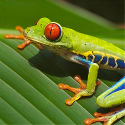 L'Office du Tourisme du Costa Rica fait actuellement un sondage