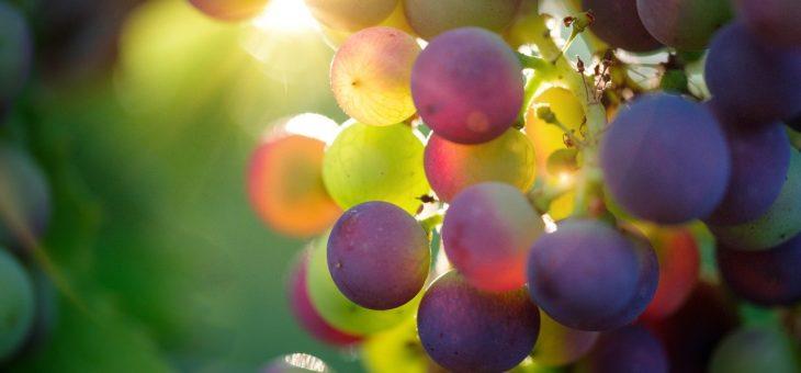 Sur la route des vins en Amérique latine