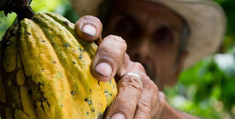 Apports de l'Amérique Latine à l'alimentation  des Européens (partie 2)